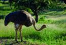 Windhoek: au creux des hauts-plateaux du sud-ouest africain