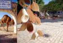 Djerba : l'île des douceurs méditerranéennes et du soleil saharien