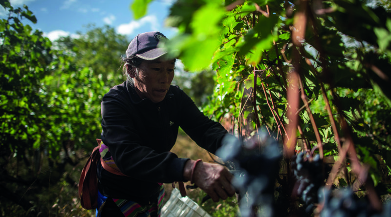 Ao Yun : le nectar tibétain de LVMH