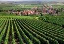 """""""Au mieux vous connaissez le vin, au plus près vous êtes du Bourgogne…"""""""
