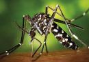 Ce qu'il faut savoir au sujet du virus Zika