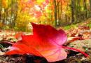 L'automne en avril